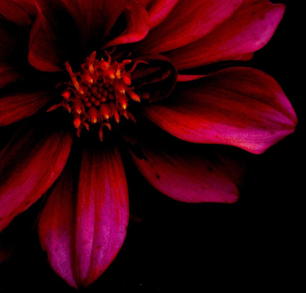 Pink Flower by elenmirie