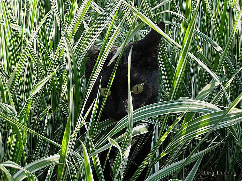peek a boo by Cheryl Dunning