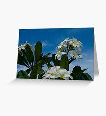 Frangipanis Greeting Card