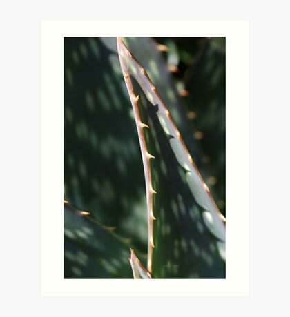 Succulent Sharp Art Print