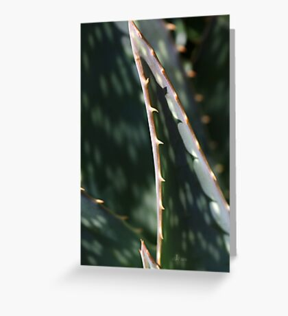 Succulent Sharp Greeting Card