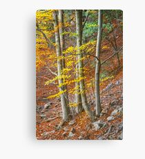 Beautifal autumn beech forest en mountain Canvas Print