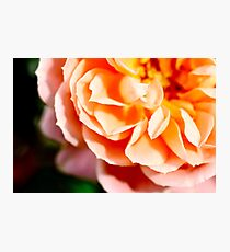 Bloom Photographic Print