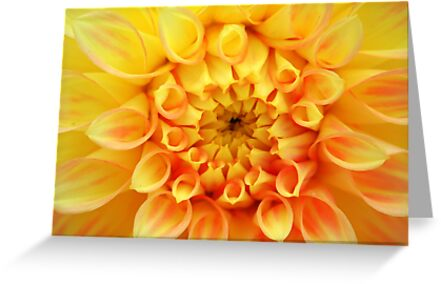 Yellow Dahlia by Laurel Talabere