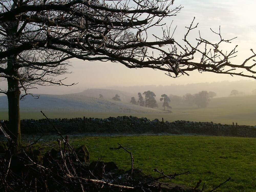 frosty morning by nancymay