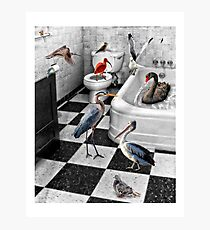 Neighborhood Birdbath 1 Photographic Print