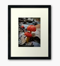 Wax Cap Fungi (Hygrocybe spp.) Framed Print