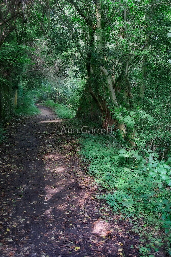 Shady Woodland Path by Ann Garrett