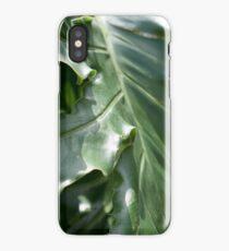 Tropical lush large palm leaf close up iPhone Case/Skin