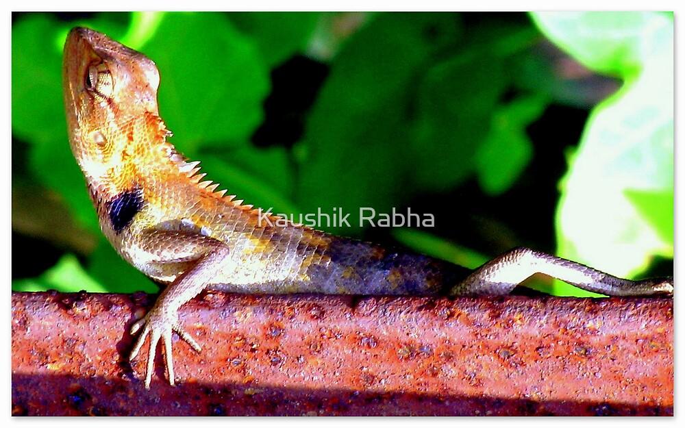 Prey by Kaushik Rabha