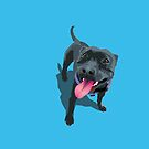 Staffy Aqua by Bloomin'  Arty Families