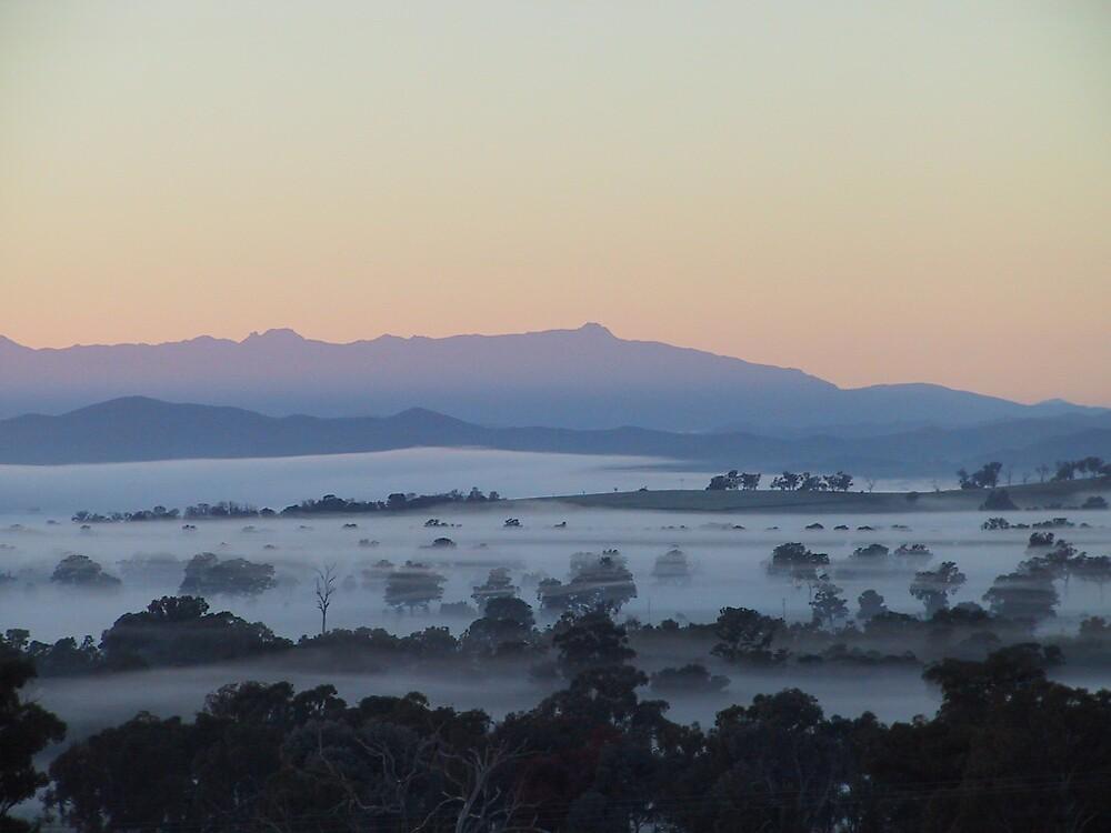 Misty Morning by Tony Slater