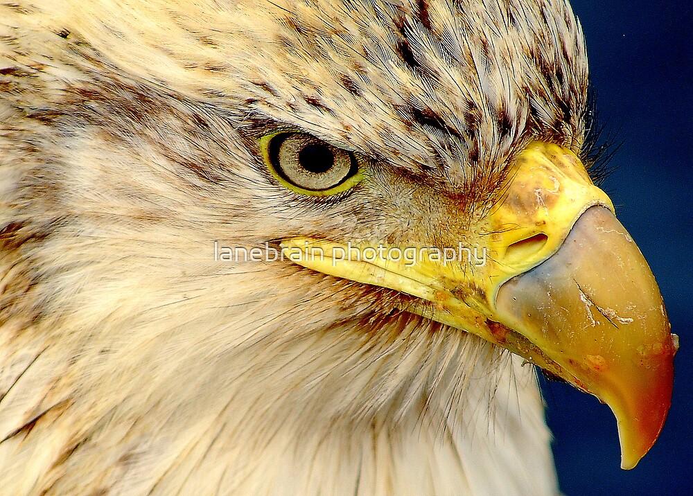 Eagles Eye by lanebrain photography
