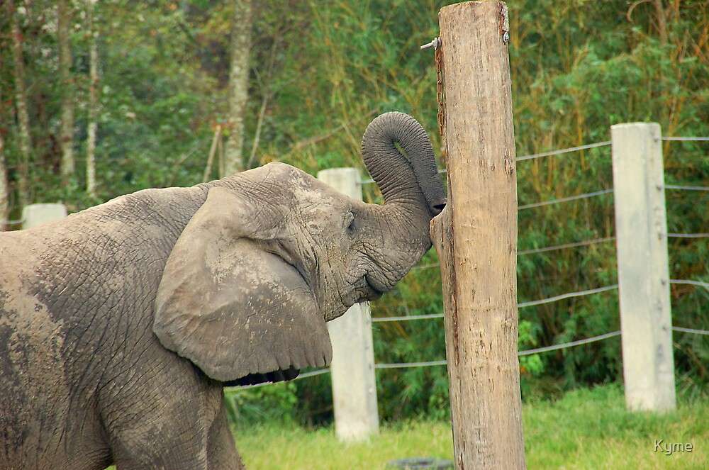 African Elephant Playing by Kyme