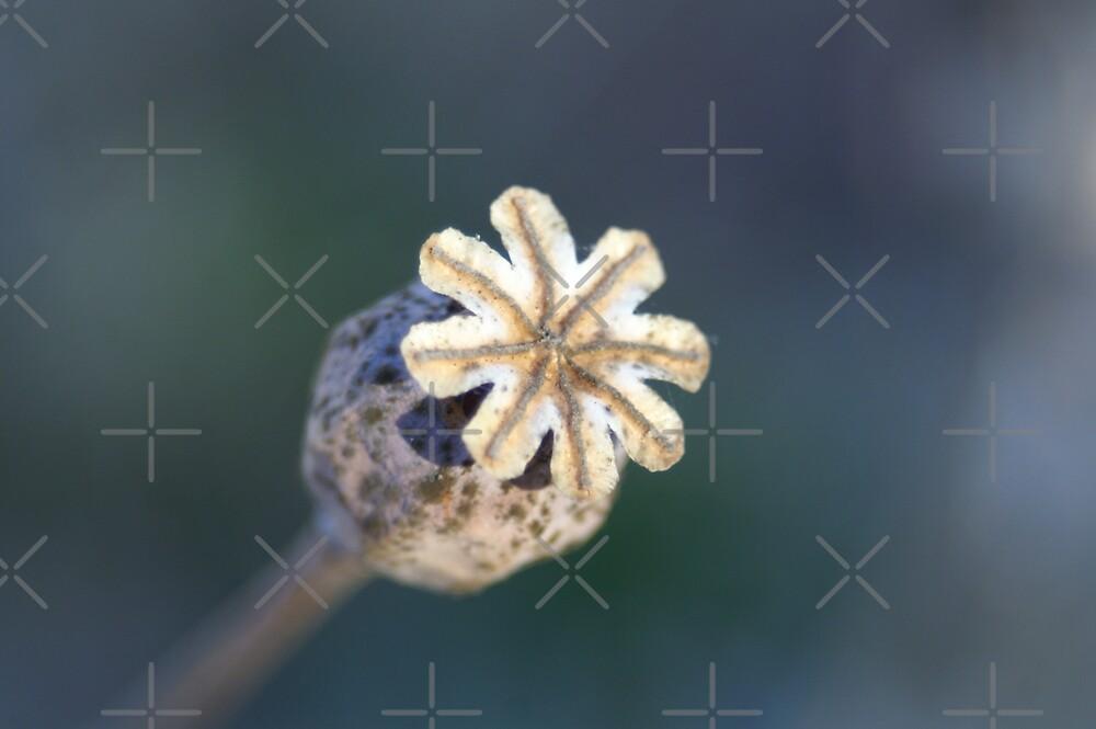 poppy pod by poupoune