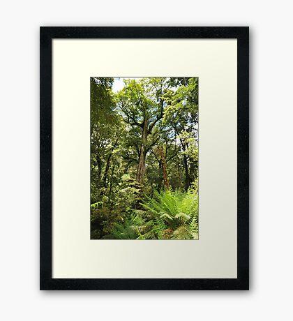 Temperate rainforest Framed Print
