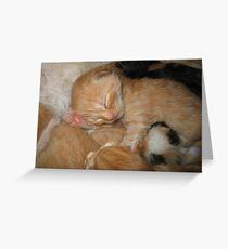 Kitten Paw Greeting Card