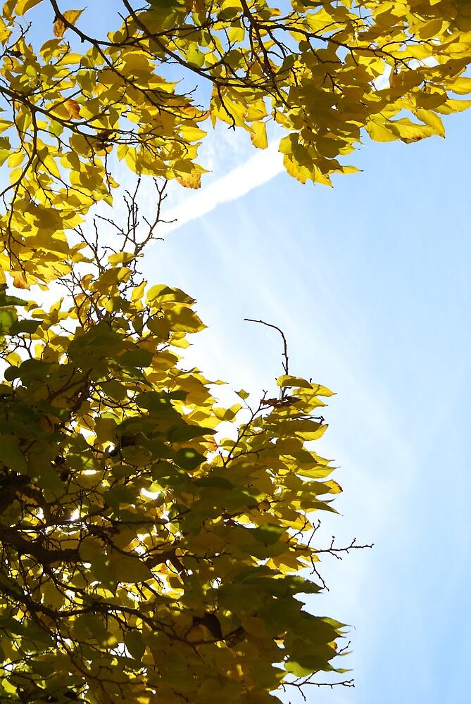 Leaves by Chris Jensen