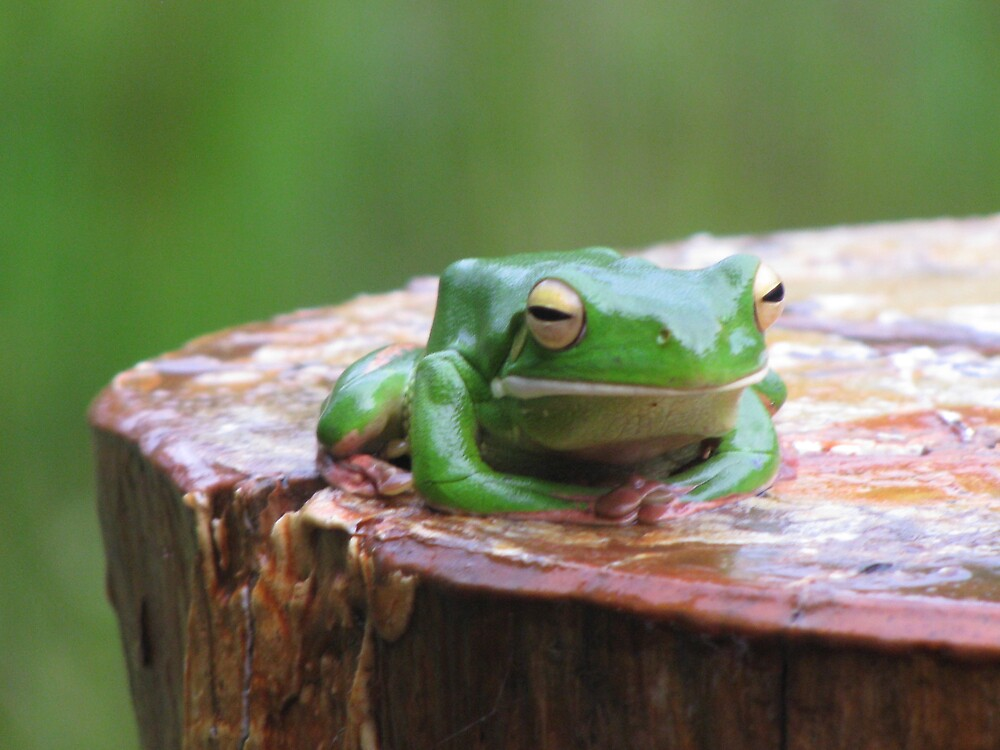 Frog on a Log. by Sue Wickes