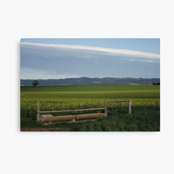 ~Barossa Valley~ Canvas Print