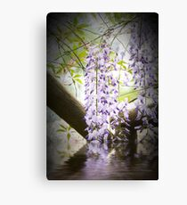 Wisteria Reflections Canvas Print