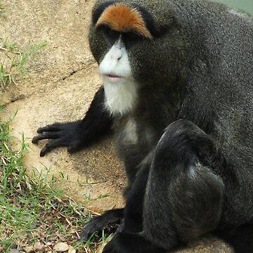 De Brazza's Monkey by martina
