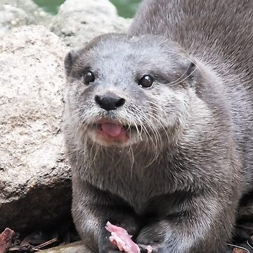 Oriental Otter by martina