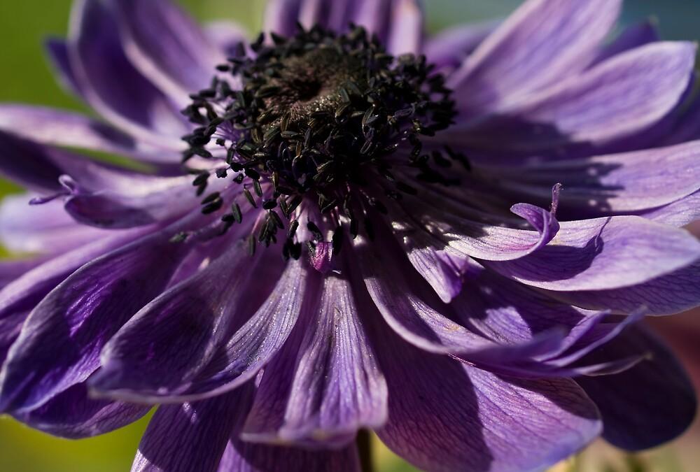 The Colour Purple by Jenni77