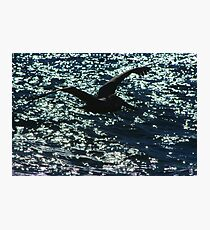 Black On The Water Photographic Print