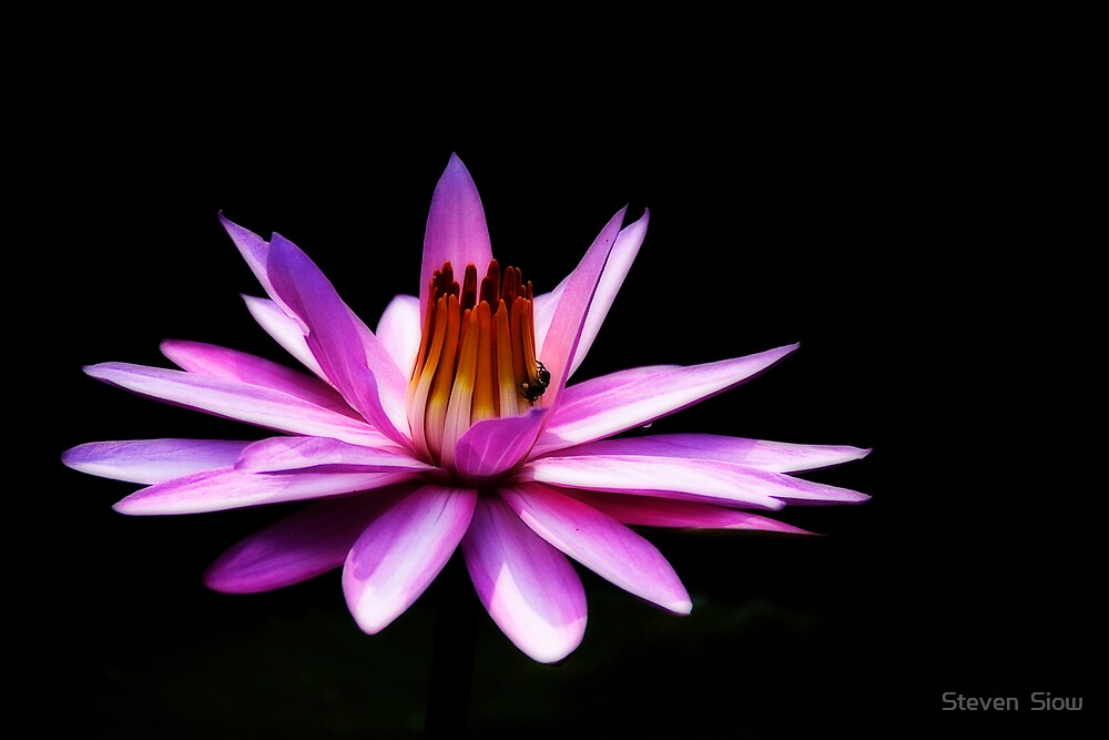 Flower In The Dark by Steven  Siow