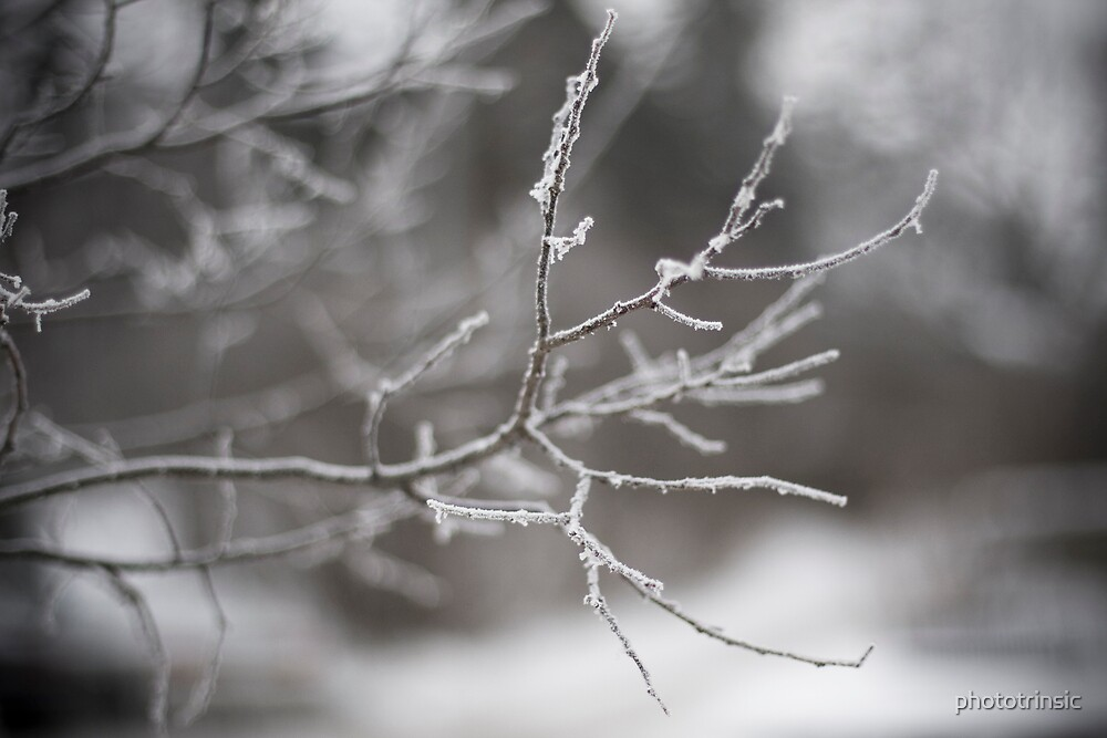 Frozen Fog by phototrinsic