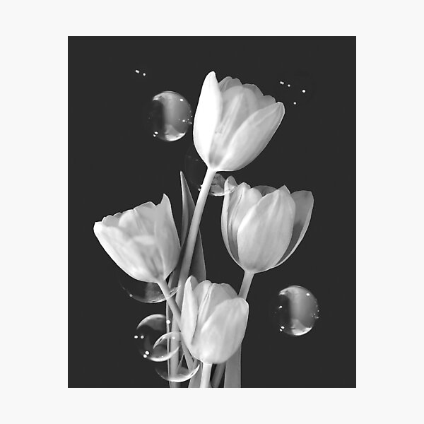 Artistic Tulip Bouquet 2 Photographic Print