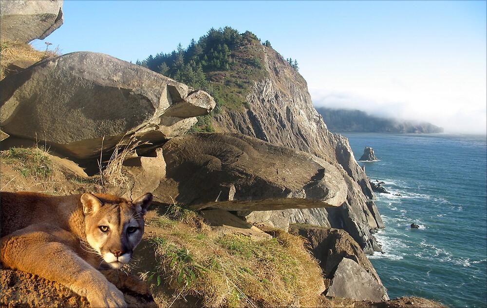 1070-California Coast Cougar by George W Banks