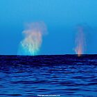 The Breath of Whales by seamonkey