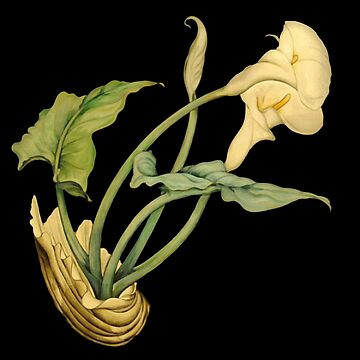 Calla Lily In Shell After Charles Demuth by taiche