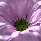 Flower Macro Photo Pink by hurmerinta