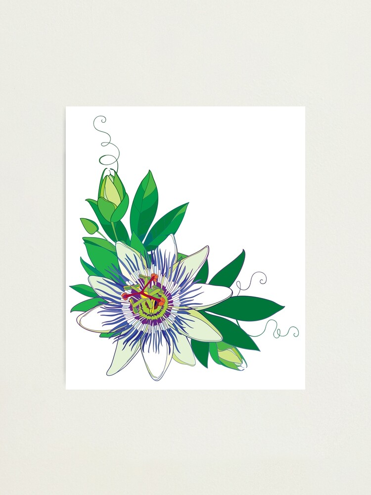 Tropical Blue Passiflora Or Passion Flower Photographic Print By