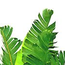 Palm Banana Leaves by Alemi
