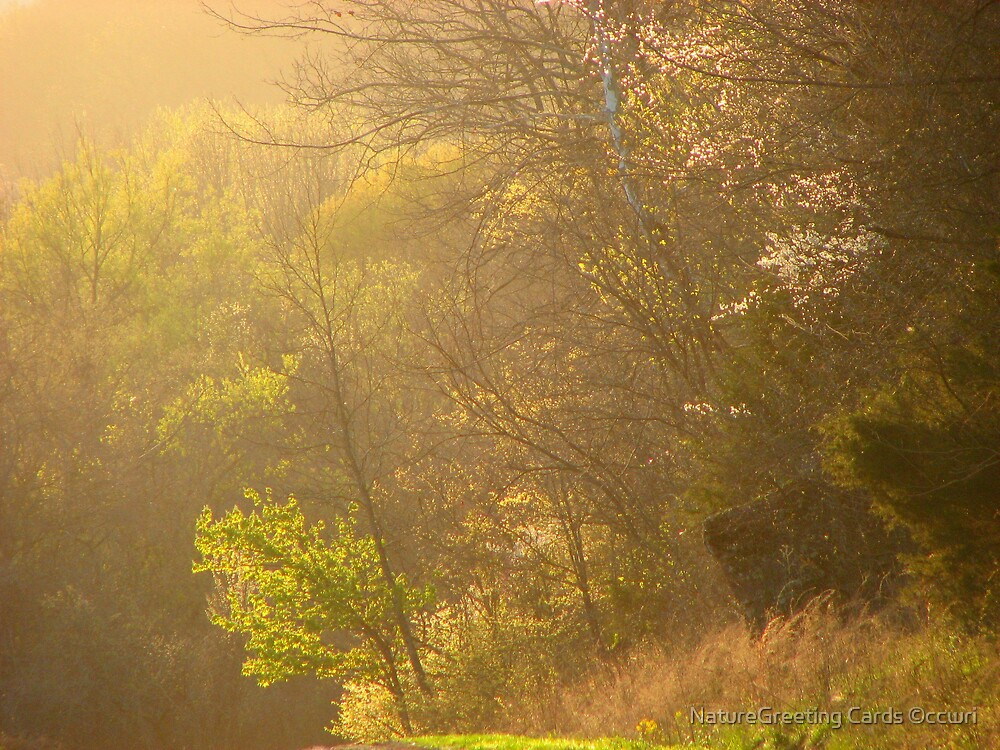 ~Golden Light Play~03 by NatureGreeting Cards ©ccwri