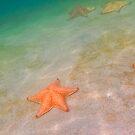 Starfish beach by Tracy Riddell