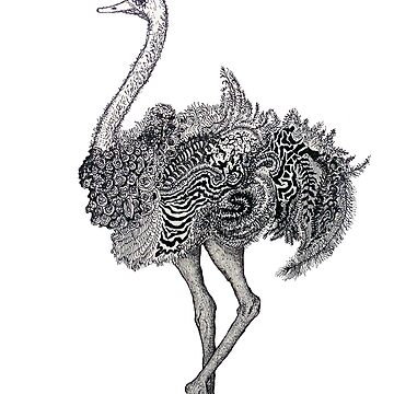 Ostrich by Kuhtina