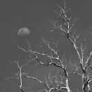 Moon and Branch by DistantLight