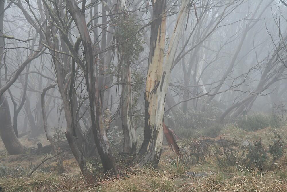 snowgums through mist by jayview