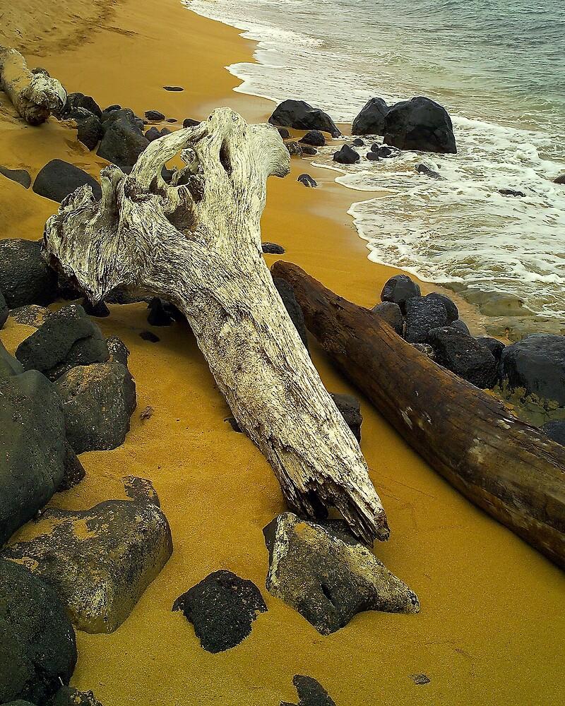 Driftwood Kauai by Dennis Begnoche Jr.