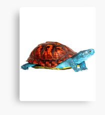Realistic Squirtle Metal Print