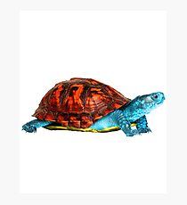 Realistic Squirtle Photographic Print