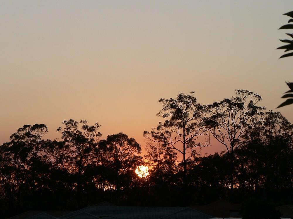 sunset trees by kelstar292