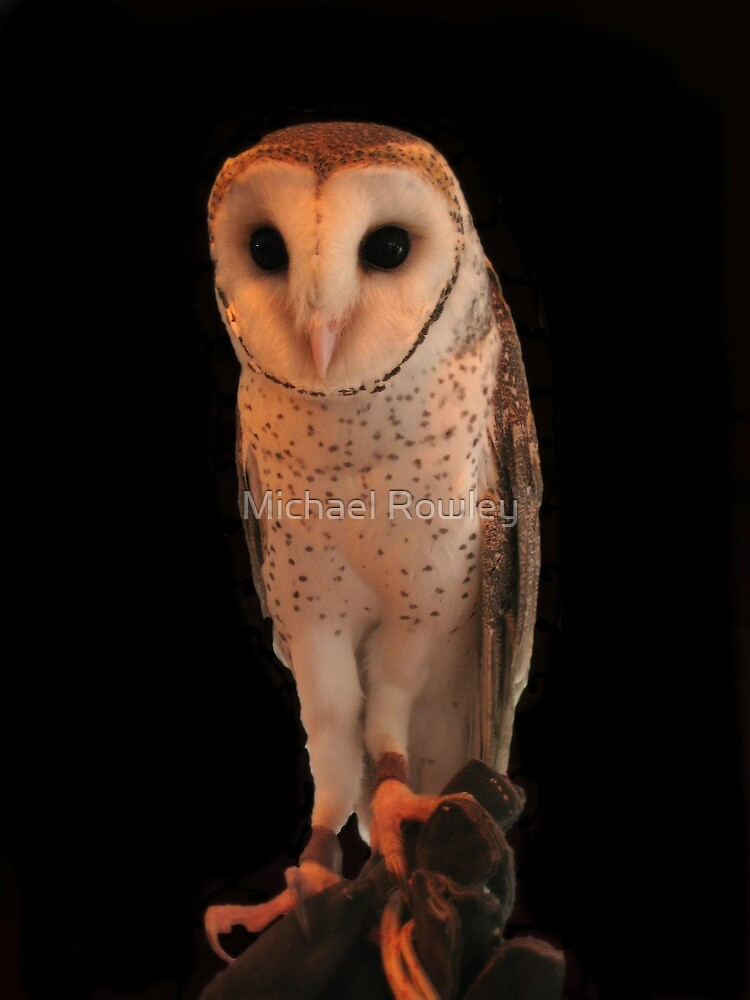 Owl by Michael Rowley