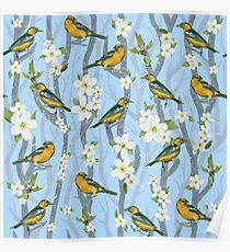 Oriole blue Poster