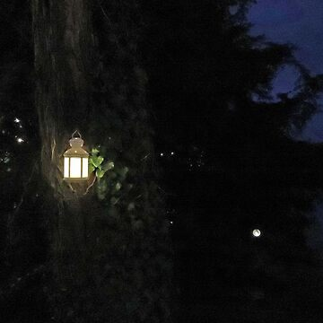 Fairy Lantern by CreativeEm